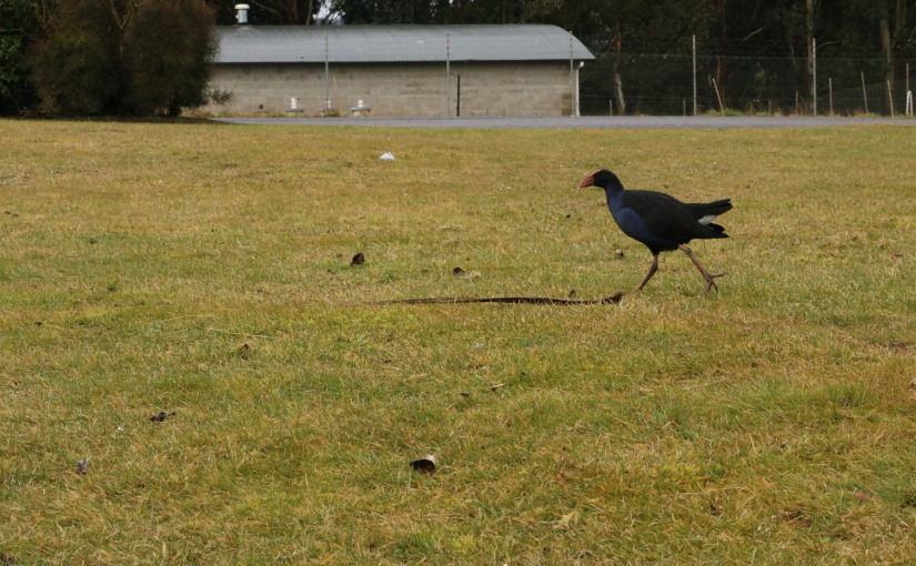 Dunedin's Landfill and ItsInhabitants