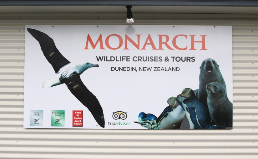 Monarch Cruise in Otago Harbour